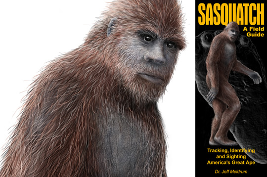 Sasquatch or bigfoot illustration
